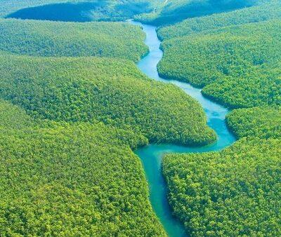 tại sao phải đặt vấn đề bảo vệ rừng Amazon
